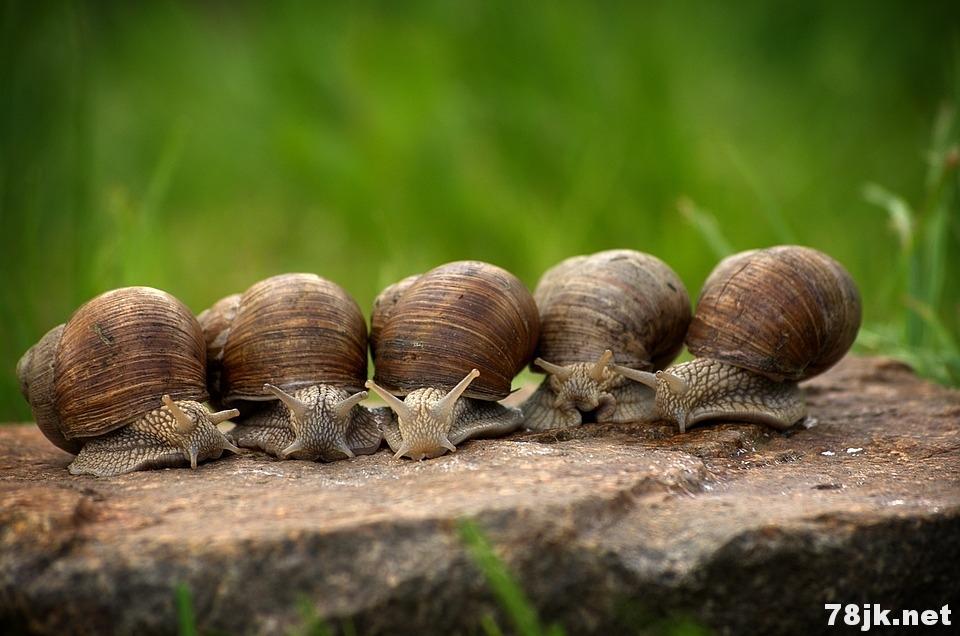 蜗牛可以吃吗?是健康的吗?