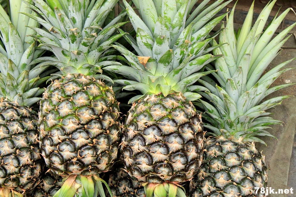 菠萝的功效以及好处有哪些?