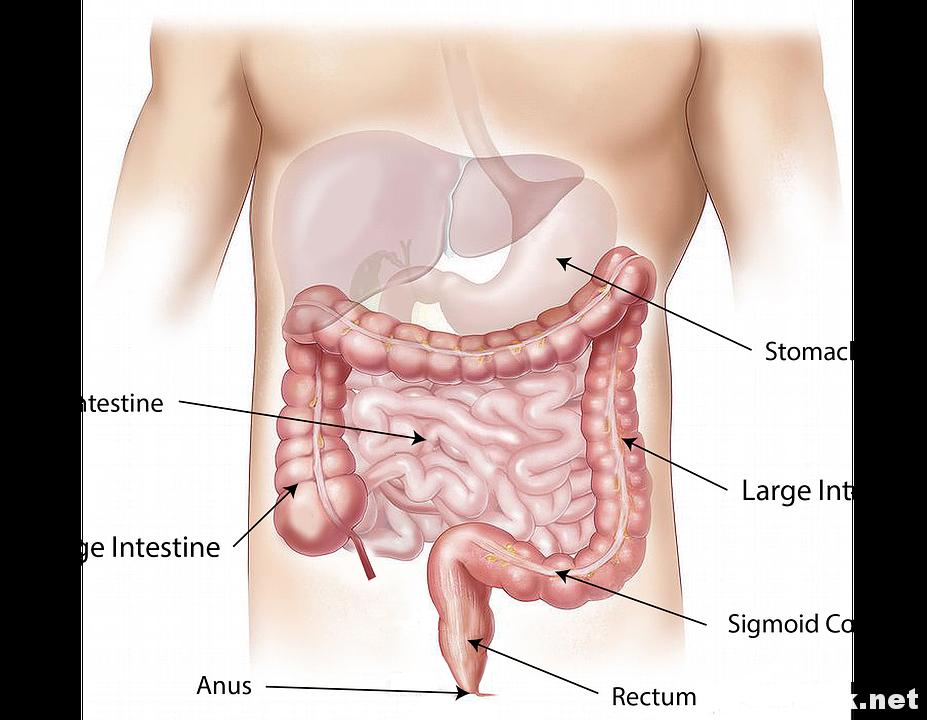 肠道是最大的免疫器官,它出了问题健康难以保障