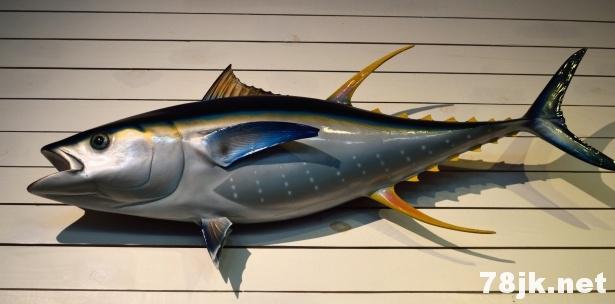 金枪鱼的 13 个营养价值以及好处