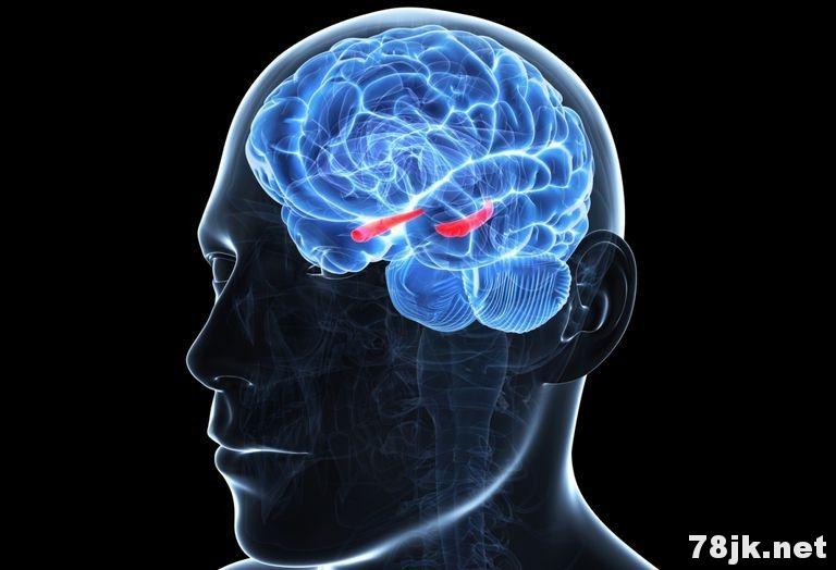 海马体在大脑中有什么作用?