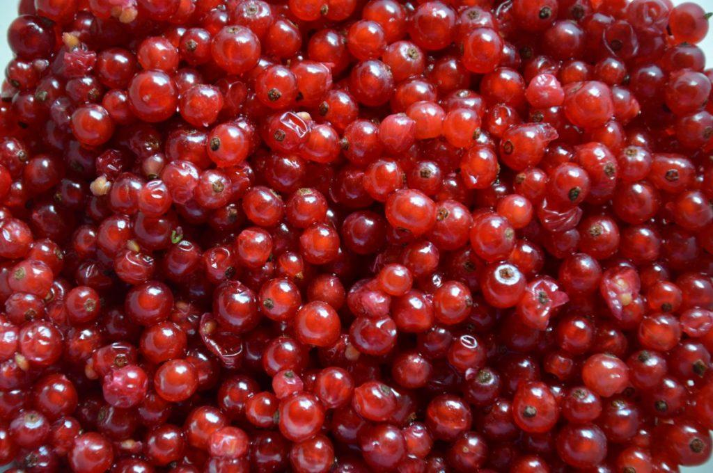13 个蔓越莓的营养价值、作用以及功效