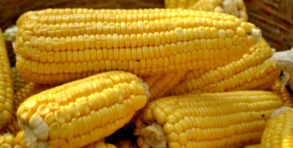13 个经过证实的玉米的功效、作用以及副作用