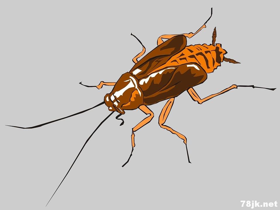 蟑螂会咬人吗?在什么样的情况下咬人?