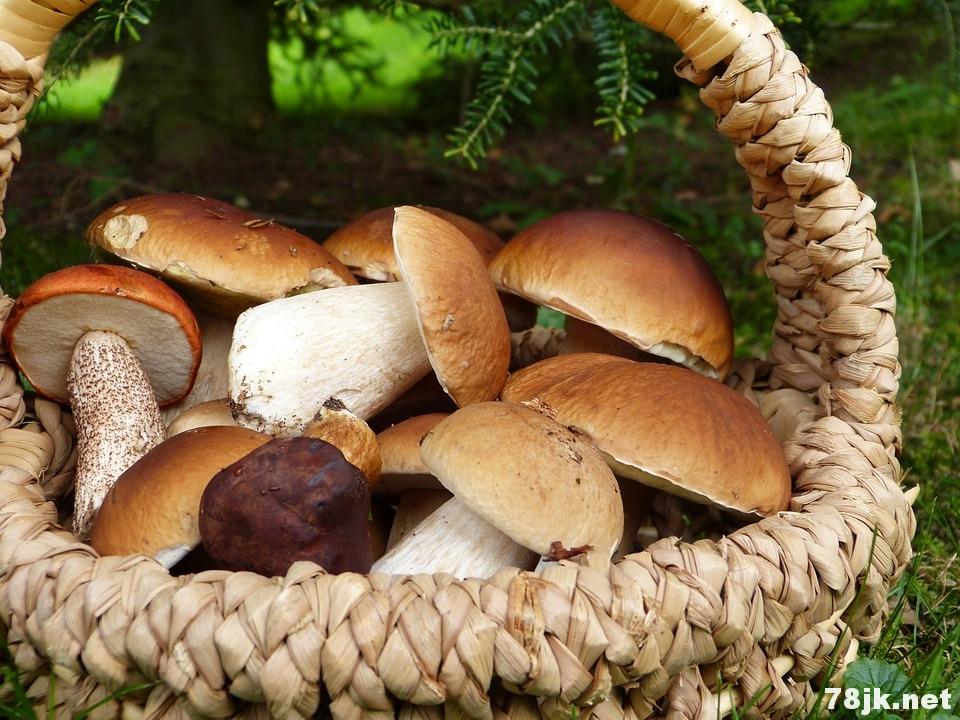 吃蘑菇能保护大脑健康吗?