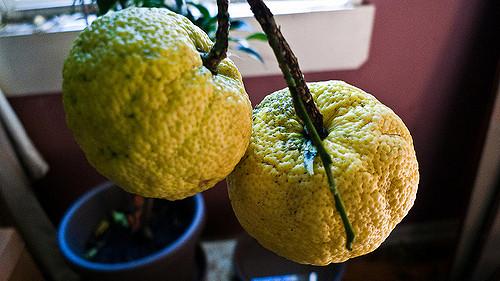 香橙有什么好处?香橙的 13 个功效与作用你知道吗?