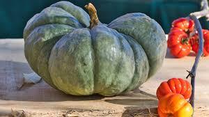 冬瓜的营养价值和 11 个功效与作用