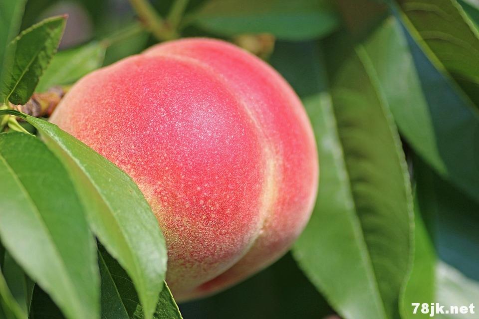 桃的营养价值以及 18 个功效与作用
