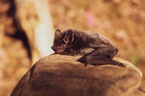 为什么蝙蝠身上的病毒如此致命(具备传染性)?